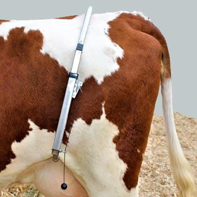 FlexCow auf Kuh